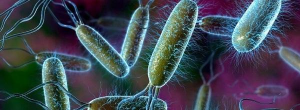 Инфекционные заболевания ЖКТ